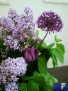 Sorry it's out of focus, but the dark purple blob in the top right hand corner is the allium.