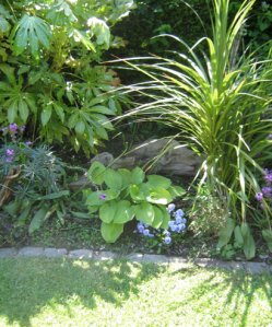 In a 'u' shape from the top left hand corner: Fatsia, erysimum Bowles Mauve, hosta, pansy, cordyline.